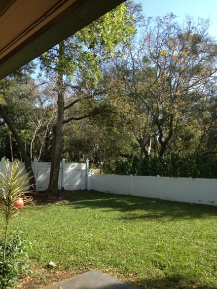 vicki backyard